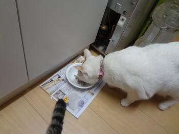 食べるすあま