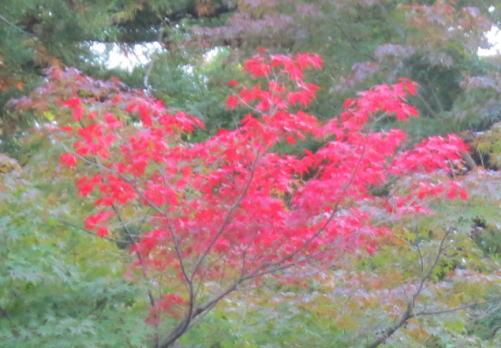 ちょっぴり紅葉
