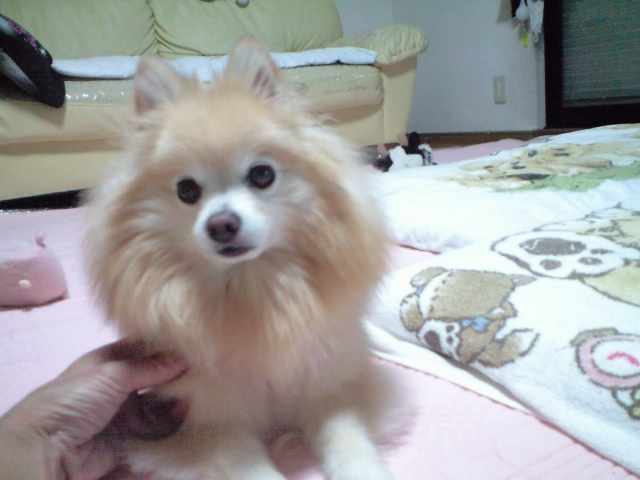 CA3A0580003-2012-08-10.jpg