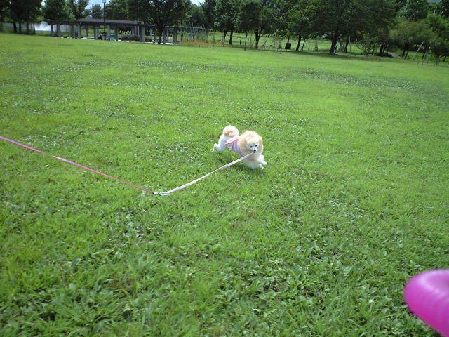 CA3A0594-2012-09-11.jpg