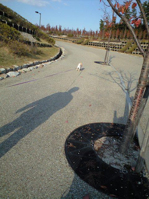 CA3A0739-2012-11-14.jpg