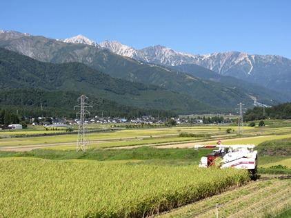 快晴の白馬村にはこの景色があるのです