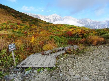 黒菱平から急登を上がったところ、三山がきれいに紅葉に映えて・・・