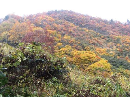 11.9大網峠越えて糸魚川方向に下山、まだまだ紅葉が素晴らしく