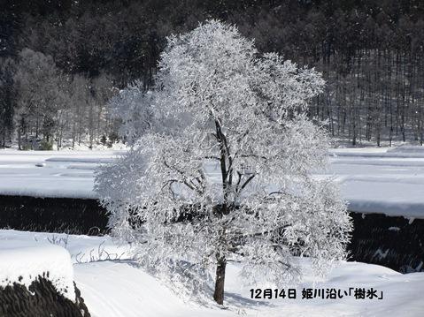 12月14日姫川沿いの樹氷