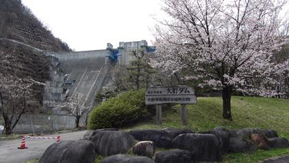 大町ダムと桜