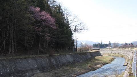 7姫川沿いに咲く