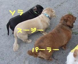 3dp.jpg