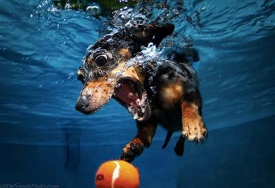 DoggieBall.jpg