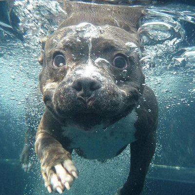 DoggieStareWater.jpg