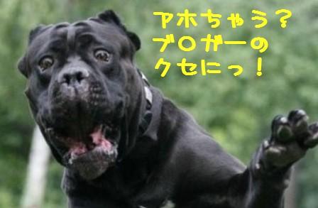 OMGdog.jpg