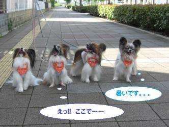03-01_20120803103102.jpg
