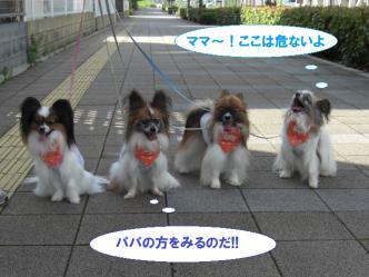 03-02_20120803103101.jpg