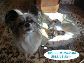 03-03_20121228195150.jpg