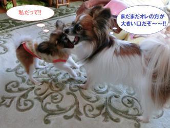 12-03_20121212161914.jpg