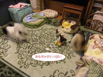 17-08_20121129174510.jpg