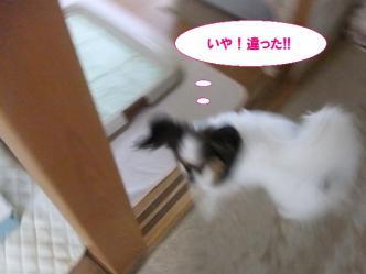 18-04_20121018123710.jpg