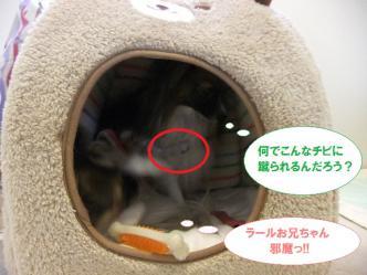 18-04_20121202145203.jpg