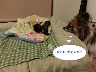 20-09_20121205122156.jpg