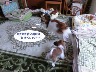 22-13_20121210125559.jpg