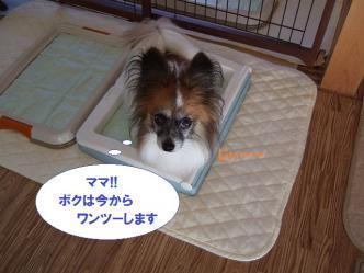 25-09_20121025182200.jpg