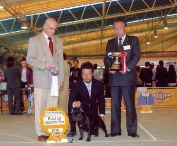 dog-show3_20121124094757.jpg