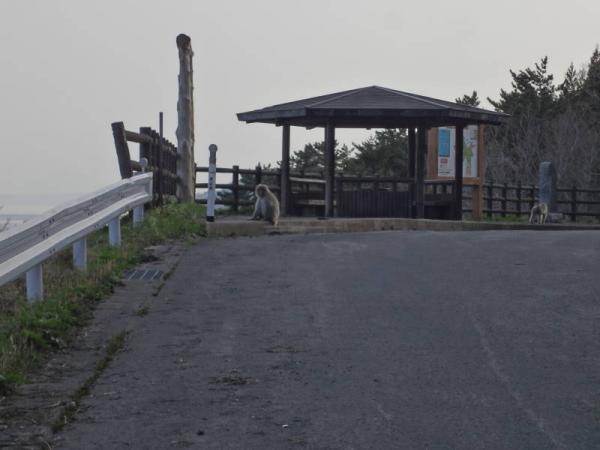 2012東北0257