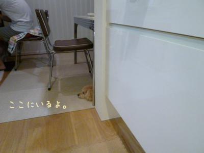 ゴハン待ち1