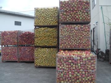 リンゴの国