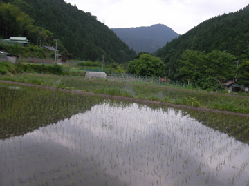 田んぼ全景