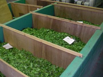 お茶工場勤め