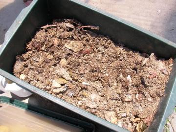 生ゴミ堆肥2