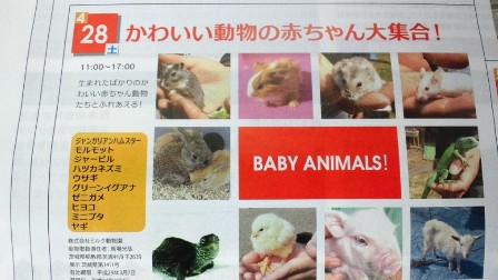 イベント赤ちゃん