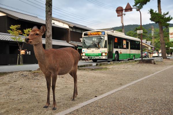 2012年10月4日 奈良公園