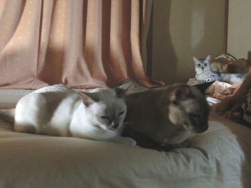 hikaru&miu&rayleigh 7