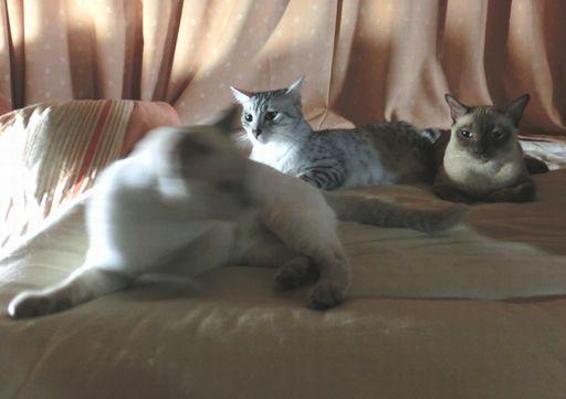 hikaru&miu&rayleigh 8