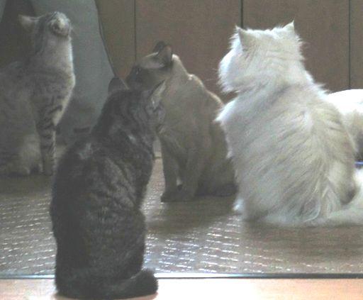 fluffy&yutaka&hikaru&miu&rayleigh 5