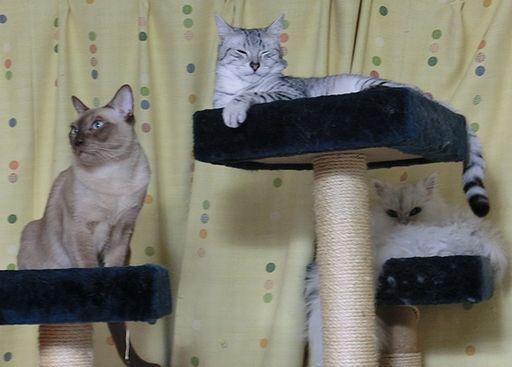 yutaka&hikaru&rayleigh 3