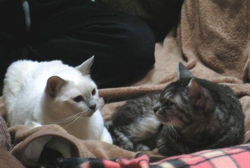fluffy&miu 44