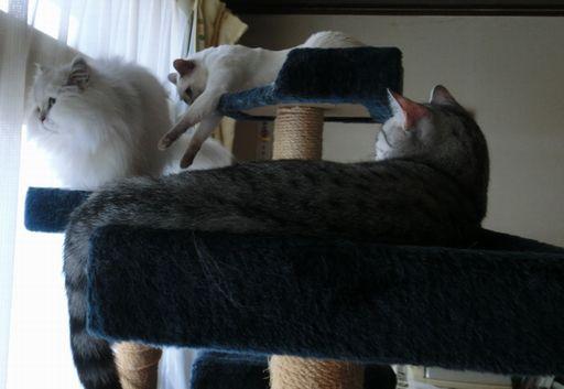 yutaka&miu&rayleigh 6