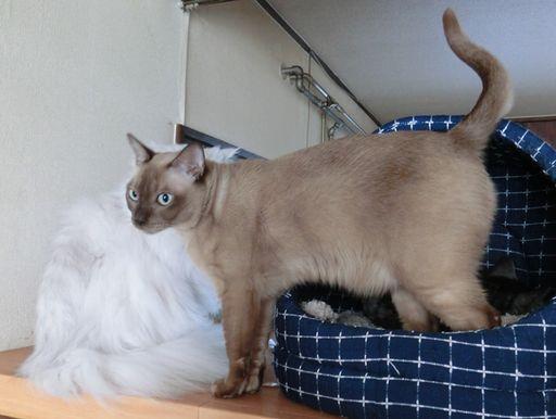 fluffy&yutaka&hikaru 10