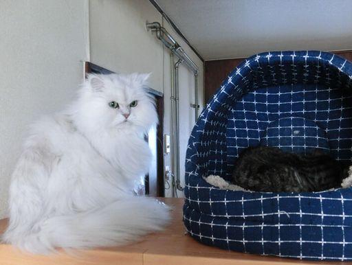 fluffy&yutaka 10