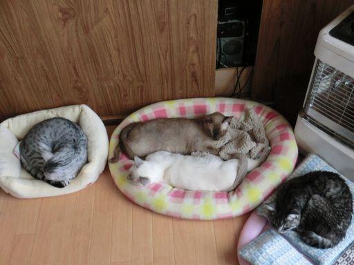 fluffy&hikaru&miu&rayleigh 1