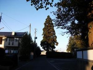 141030一本杉