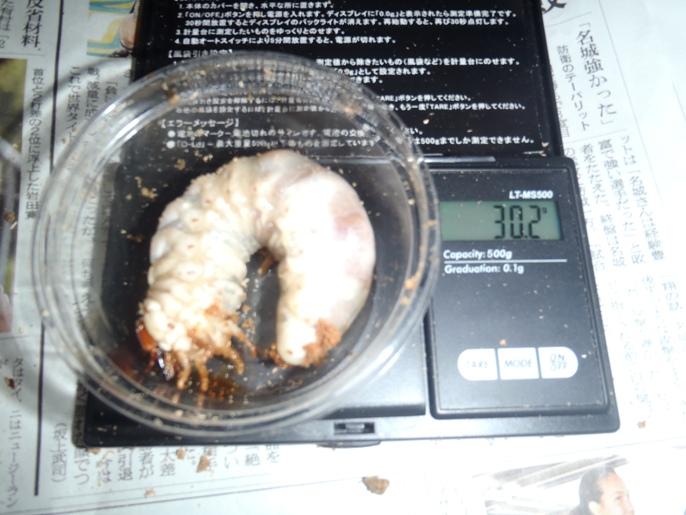 862×521NO14幼虫画像