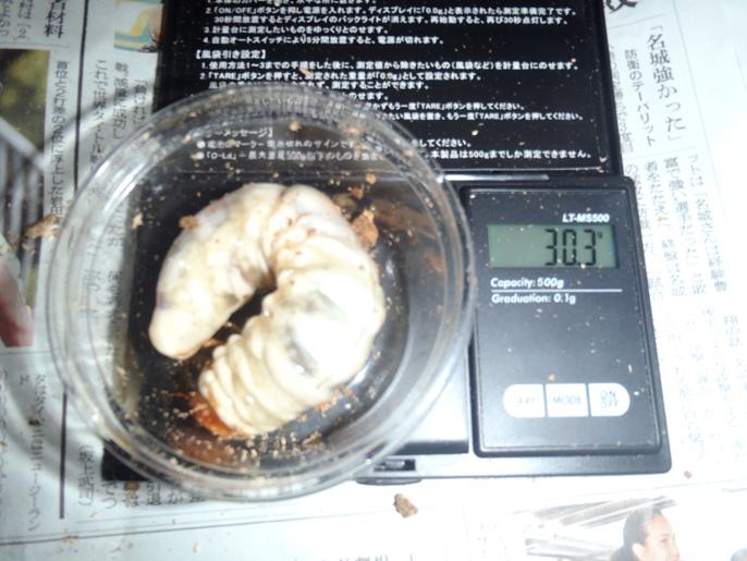 862×521NO16幼虫画像