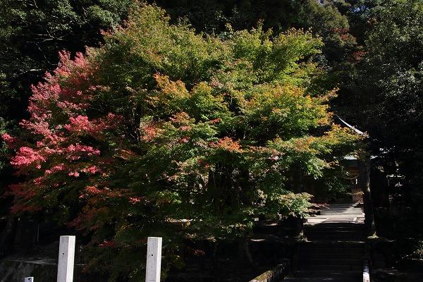 土屋三島神社紅葉 141115 01