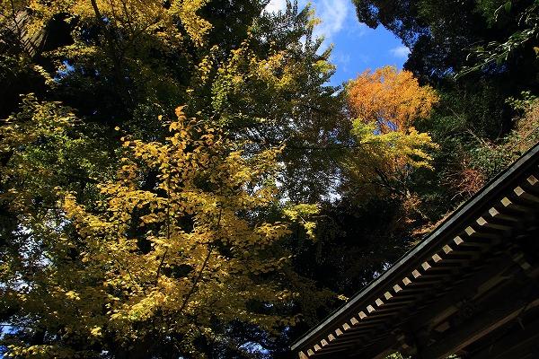 土屋三島神社紅葉 141115 04