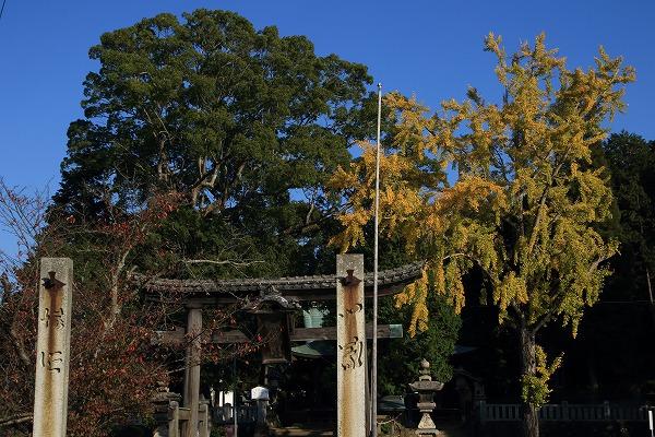 築島神社銀杏紅葉 141115 05