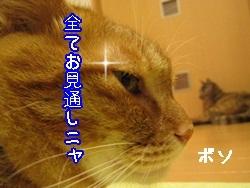 IMG_1040.jpg